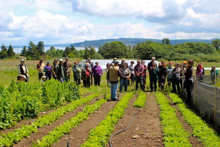 2014 Escarole field day