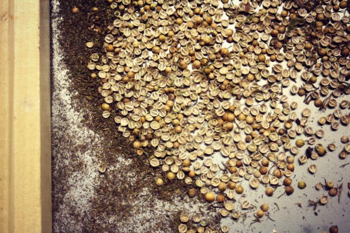 Coriander/Cilantro seed