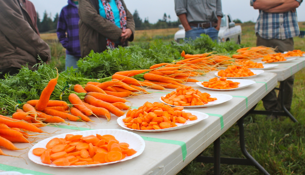 2013 Nantes Carrot taste test