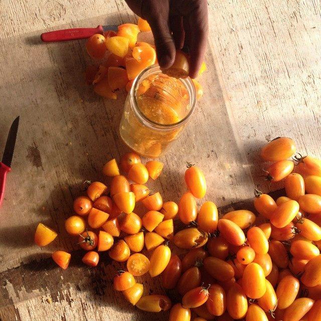 Blush tomato seed fermentation
