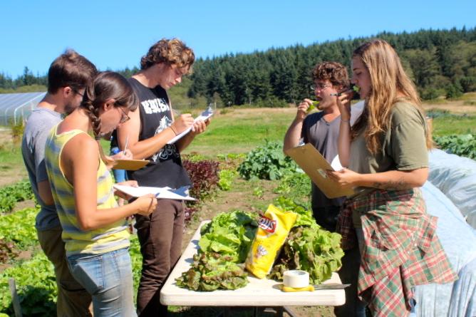 2015 Butterhead Lettuce taste test