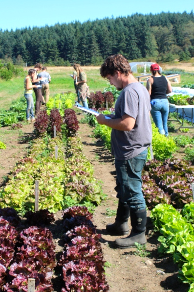 2015 Butterhead Lettuce field evaluation