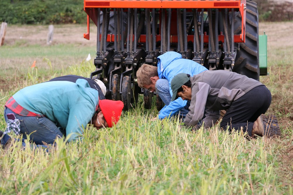 Checking seed depth after the first pass of the seed drill.