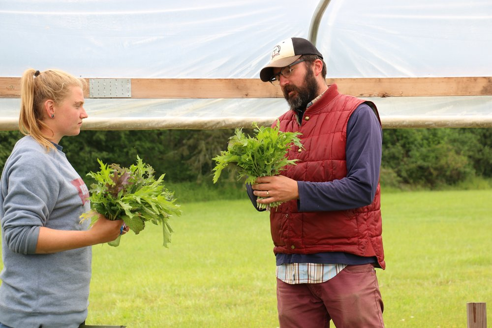 Aaron, our lead instructor and farm manager, checks in with Corbin on the ideal size for a bunch of spicy greens to send to market.