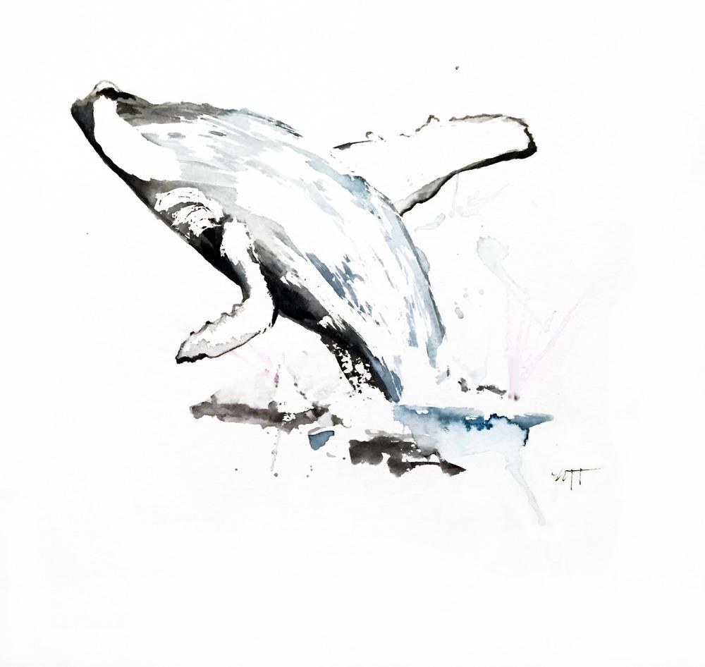 breaching_whale.jpg