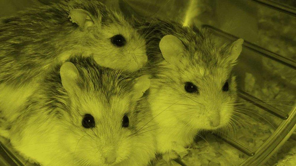 Hamster-Wheel-In-The-Forest-Blog-cover-opt.jpg