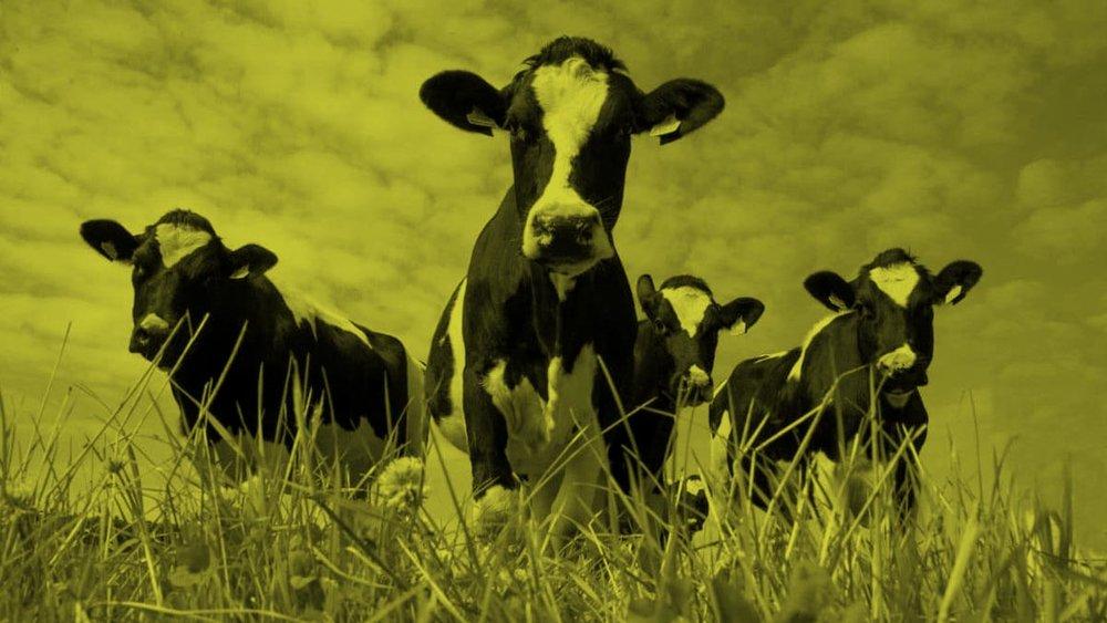 Why-I-Am-A-Cow-Philip-VanDusen-NOTEXT.jpg
