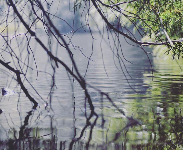 #springbreak #fragrancelake #pnw #pnwonderland #forest #larrabee