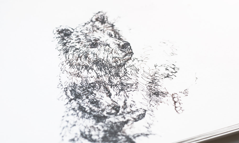 bear_sketch1_DSC_0122_crop.jpg