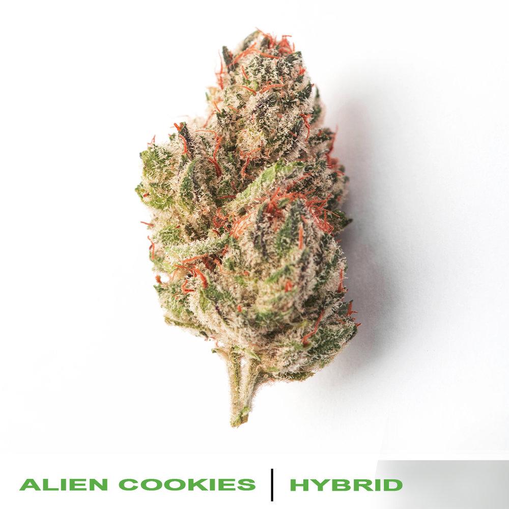 alien cookies 1200x1200px.jpg