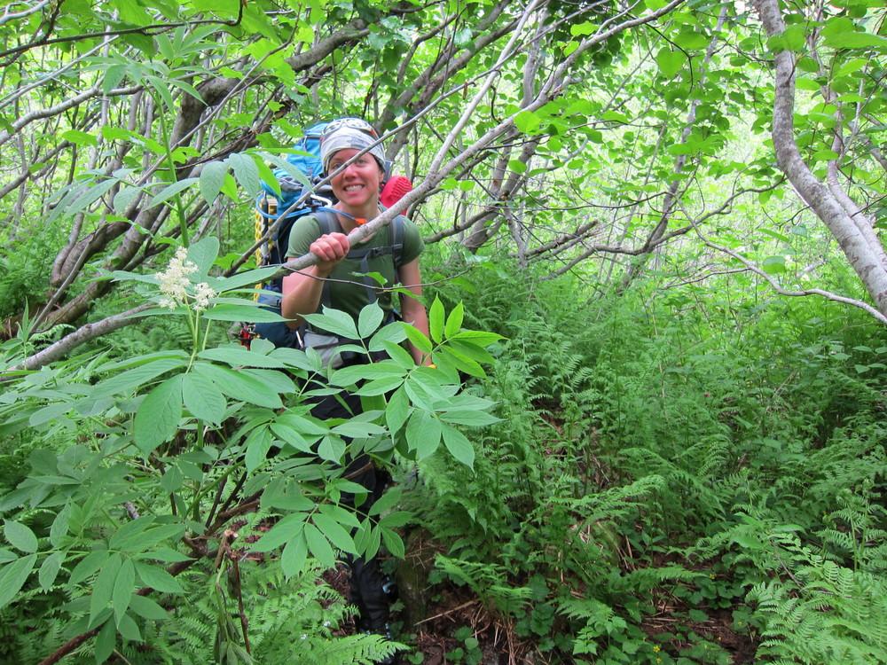 Enjoying some fun 'schwacking down the Bachelor Creek drainage.