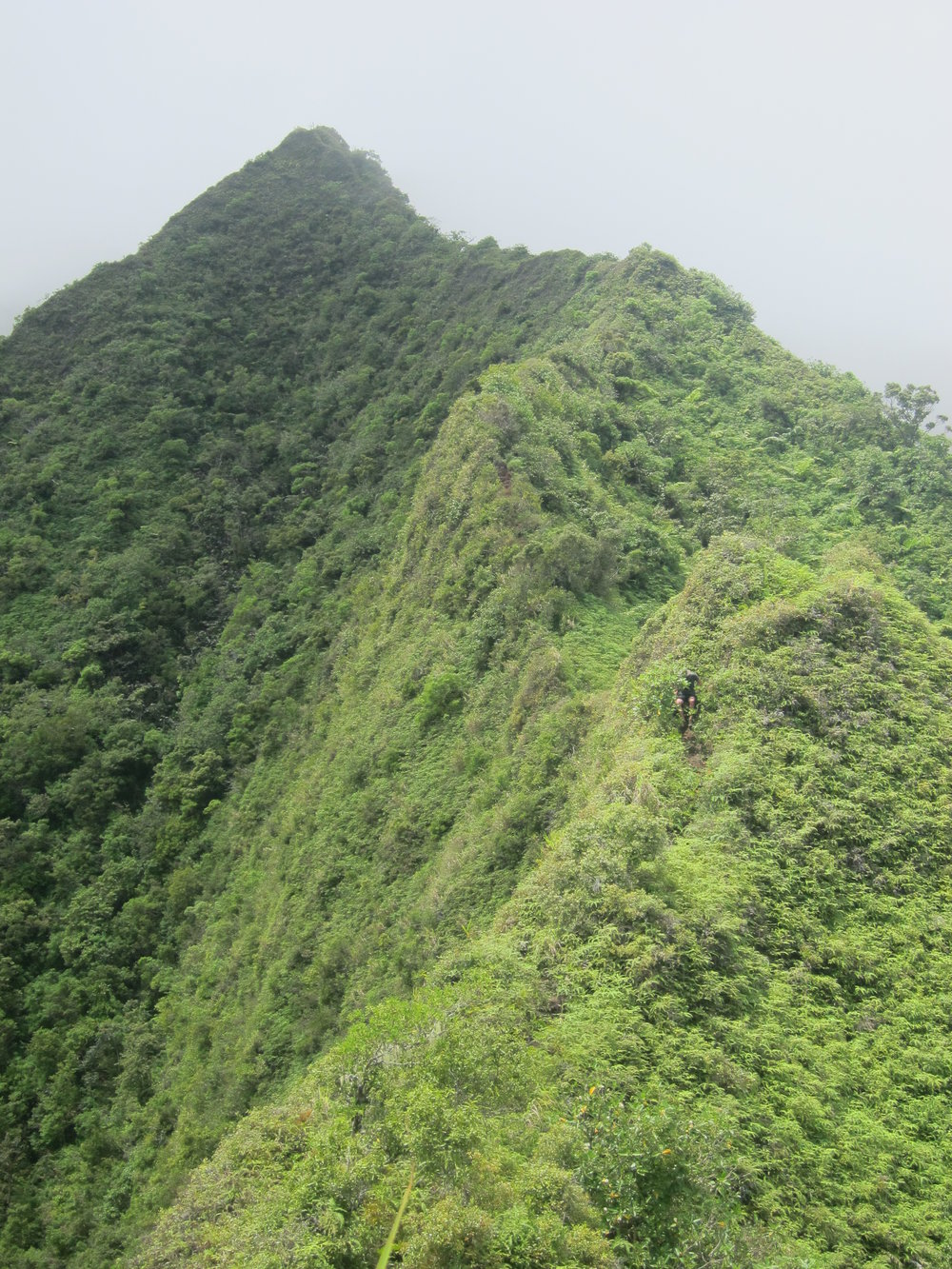 """You can just see Aaron coming down the """"trail"""". The trail followed the extremely steep ridge almost exactly."""