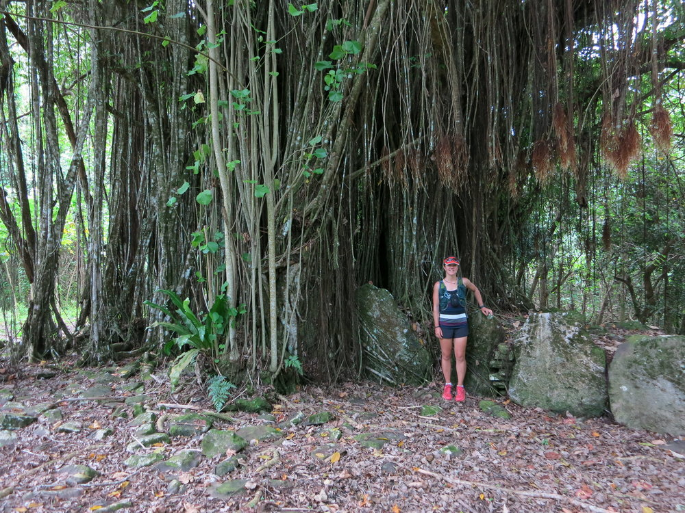 This is a massive banyan tree on Huahine - it has completely overwhelmed this marae site.