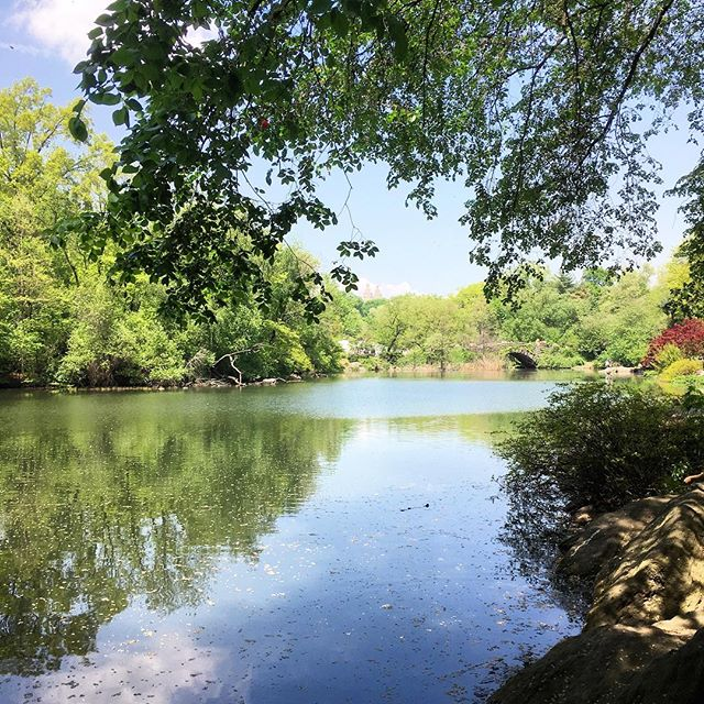 My other office, #centralpark, never ceases to amaze me with its beauty. Yesterday we got rained on by leaves and petals and it was magical, a perfect spring day. I feel so grateful to call this shared space my work place . . . #walkandtalk #walkandtalktherapy #nyctherapist #optoutside #talkingoutsidethebox #movementheals #nycparks