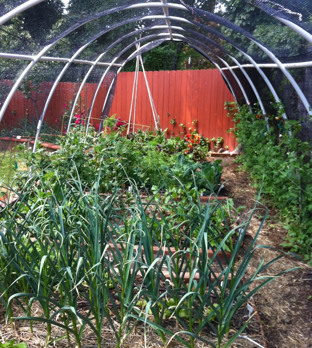Our first hoop house