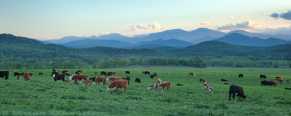 Adirondack High Peaks from the perspective of a working dairy farm in the Eastern foothills.