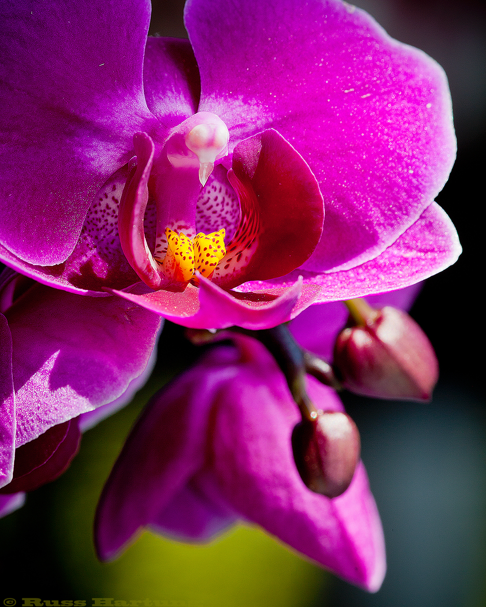 Orchid in sunlight.