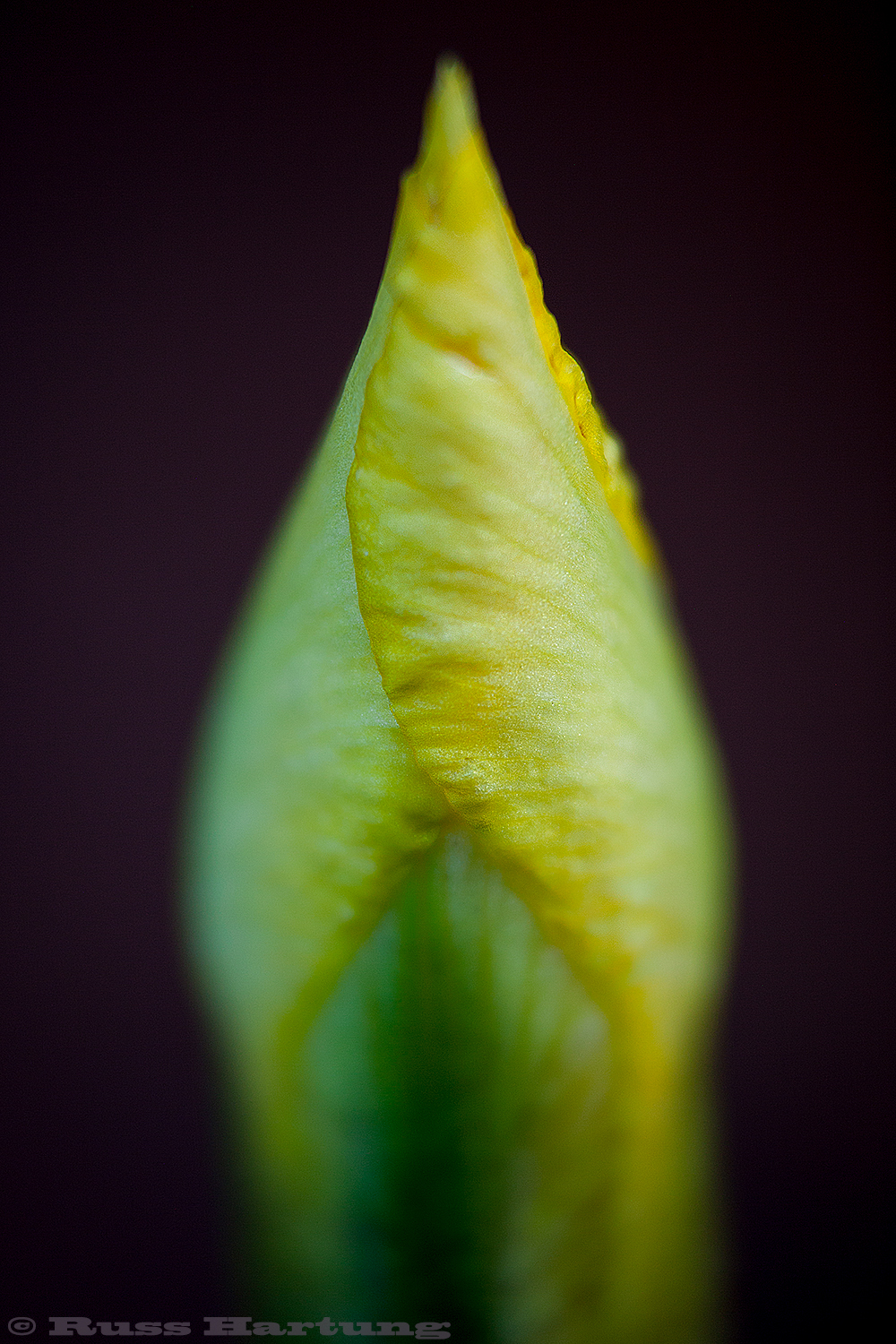 Pointed bud.