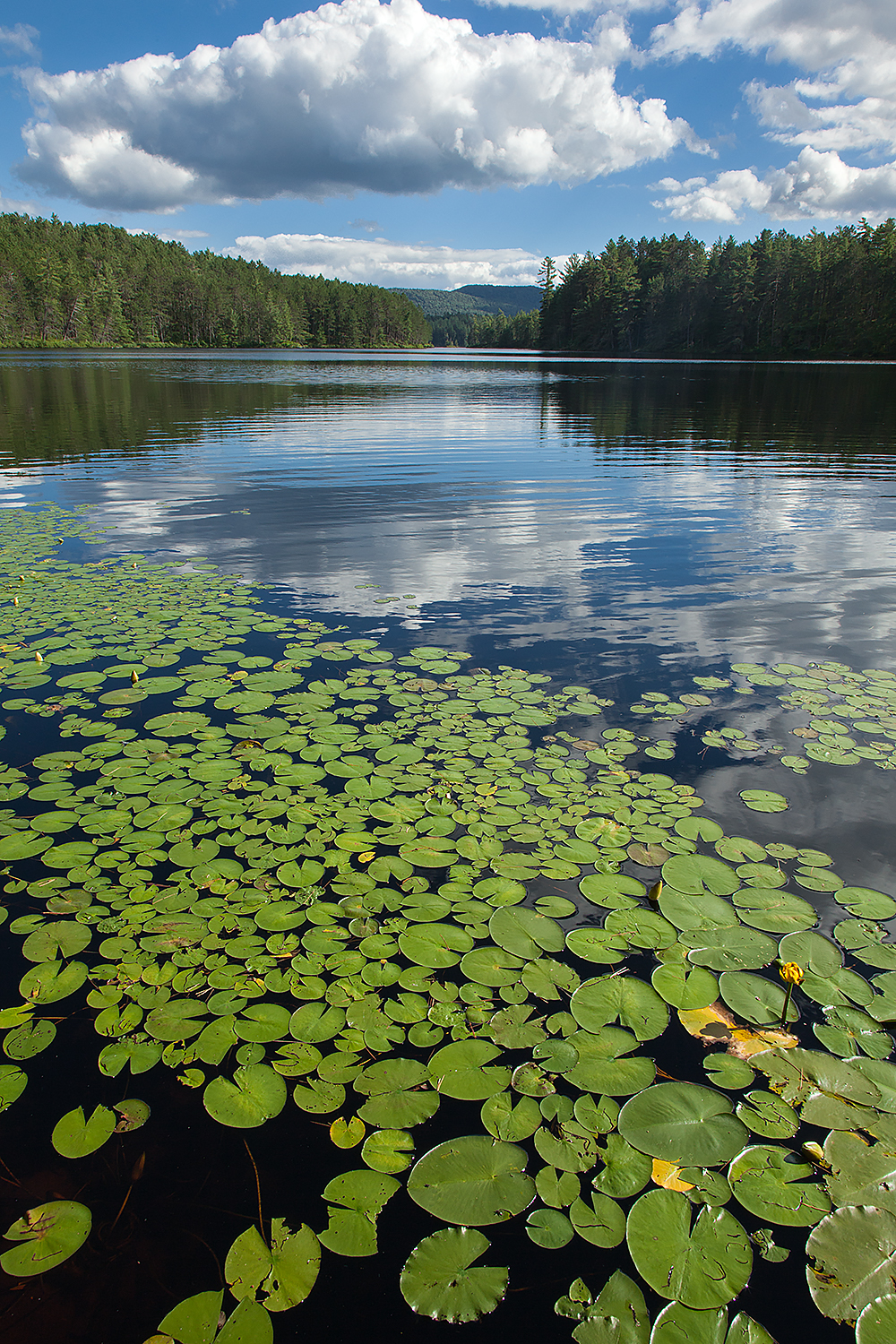 Water Lillies and puffy clouds over an Adirondack lake.