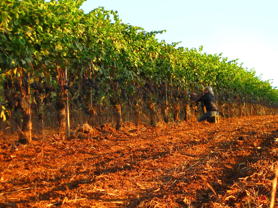 Thinning the Long Rows Block