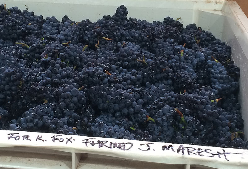 Maresh Vineyard Fruit