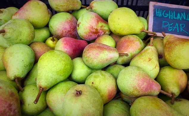 Pears from Finnriver Farm now available at the Port Townsend and Chimacum Farmers Markets.