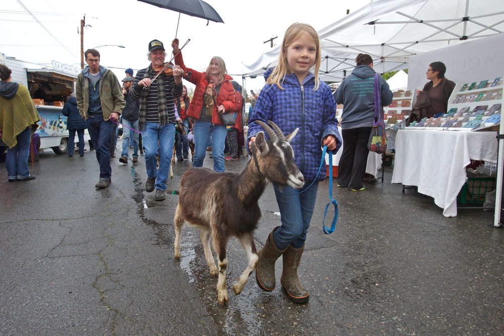 Goat parade photo by Steven Mullensky