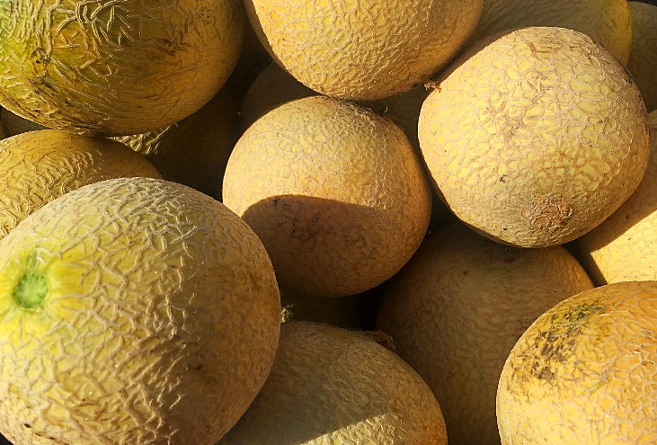 melon madness.jpg