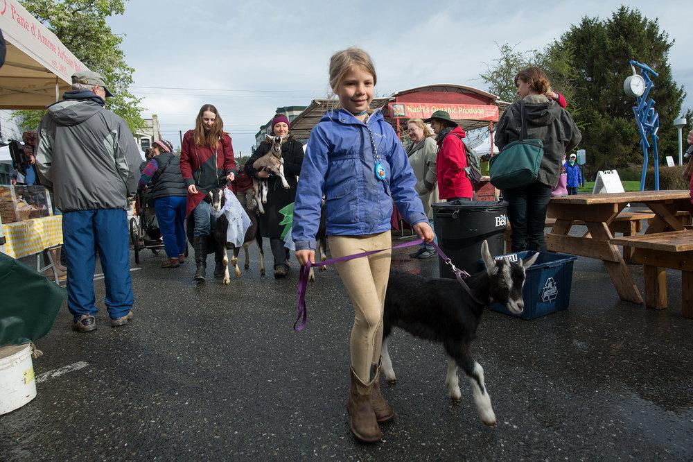 Cora, Mystery Bay Farm, Opening Day 2018. Photo by David Conklin.