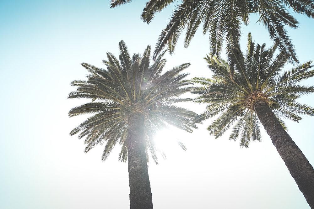Cannes - Island 3.jpg