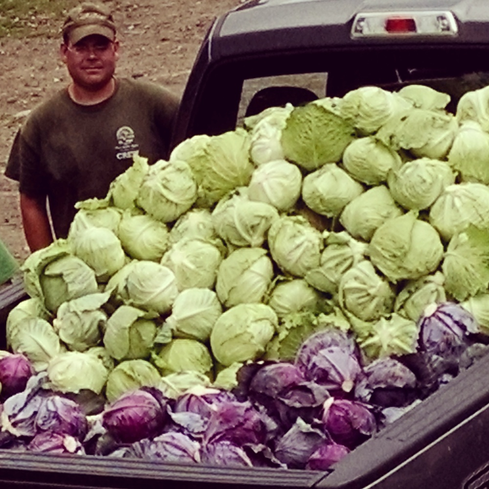 Farmer Stephen with Cabbage
