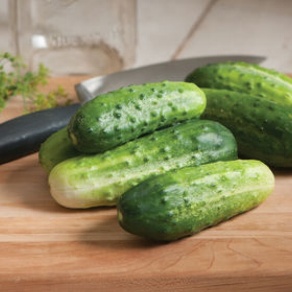 Cucumber Pickling Type