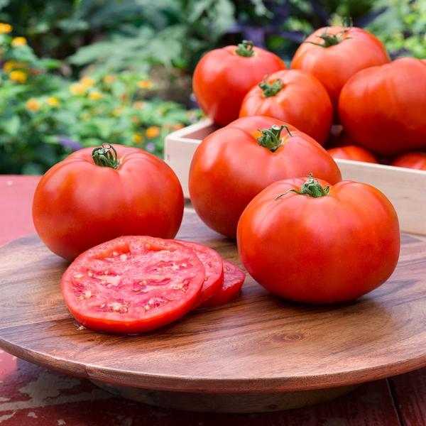 Tomato Better Boy