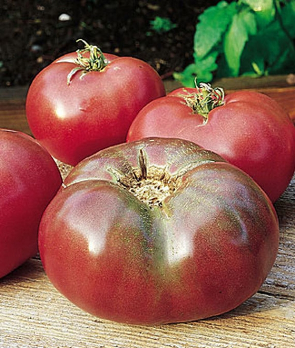 Tomato Heirloom Cherokee Purple