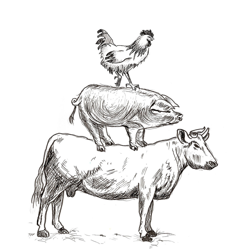 Cow+Pig+Chicken.web.jpg