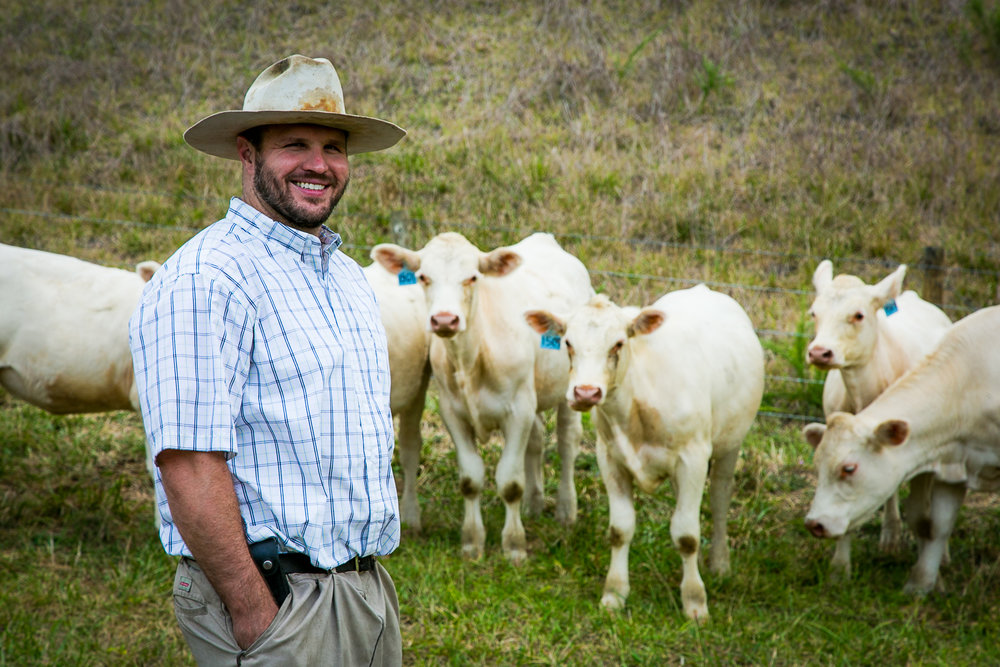 Jeff Boyst with his Charolais cows in Davidson County.