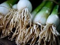 onion.jpeg