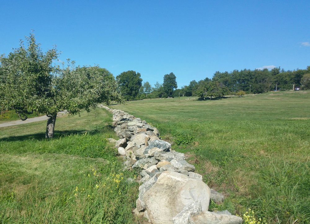 Old stone wall and possibly part of the orchard.