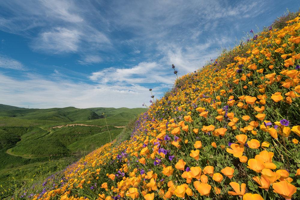Chino Hills State Park, California 2017