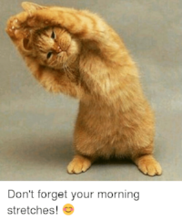 dont-forget-your-morning-stretches-😊-11376611.png