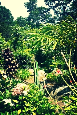 One of the many beautiful Gardens at Boquete Bees.