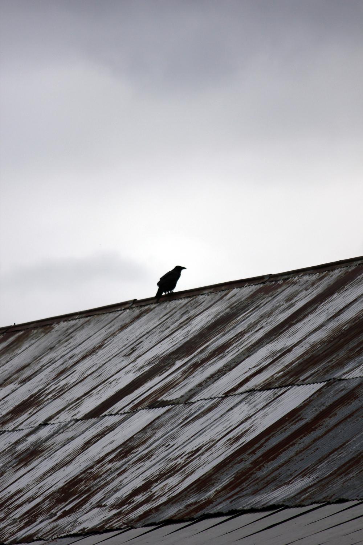 Raven Keeping Watch