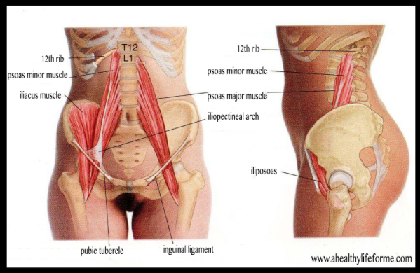 why the psoas is a muscle you need to know about lola rephann