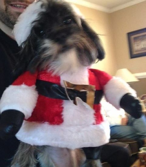 And the winner of the #girlsantaimpostor is @danie48 and her handsome pup, Chip!!! Congrats you ho ho ho's! #GirlSanta shirts are coming for both of you!!! #merrychristmas to you all!