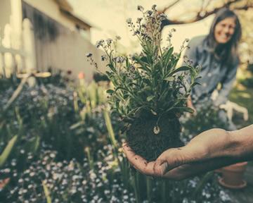 Planting Ritual
