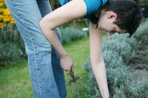 Emma weeding between the lavenders