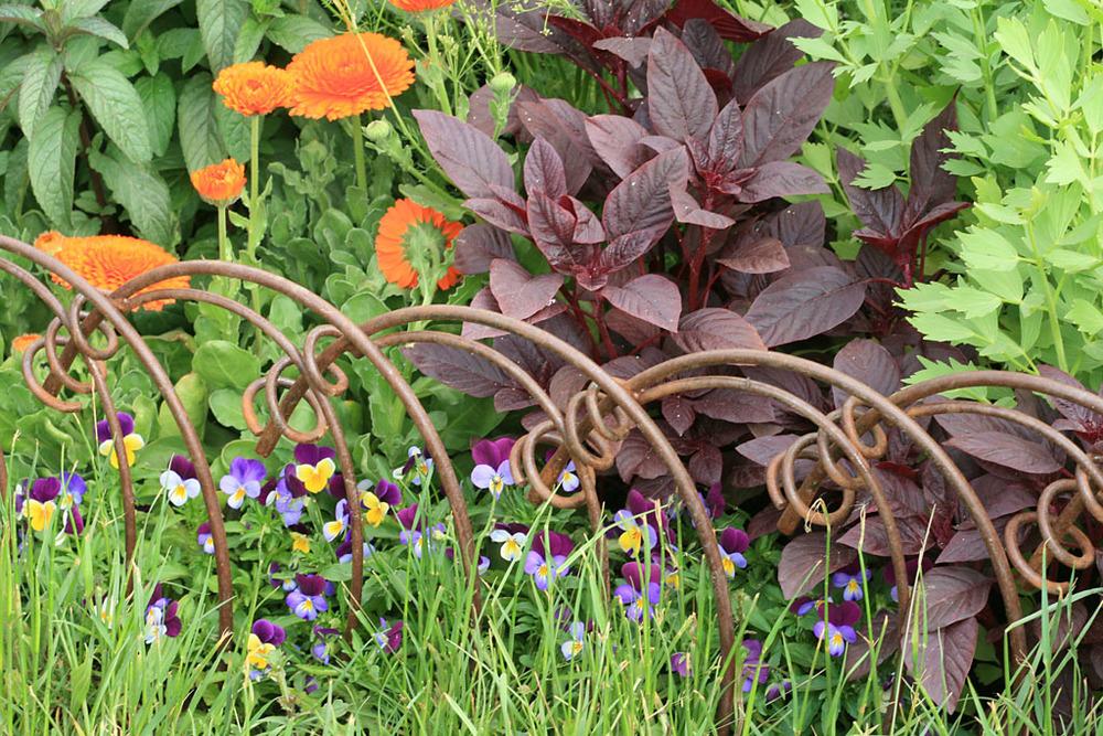 Detail from Jekka McVicar's  Modern Apothecary   Garden  for St John's Hospice RHS Chelsea Flower Show 2016