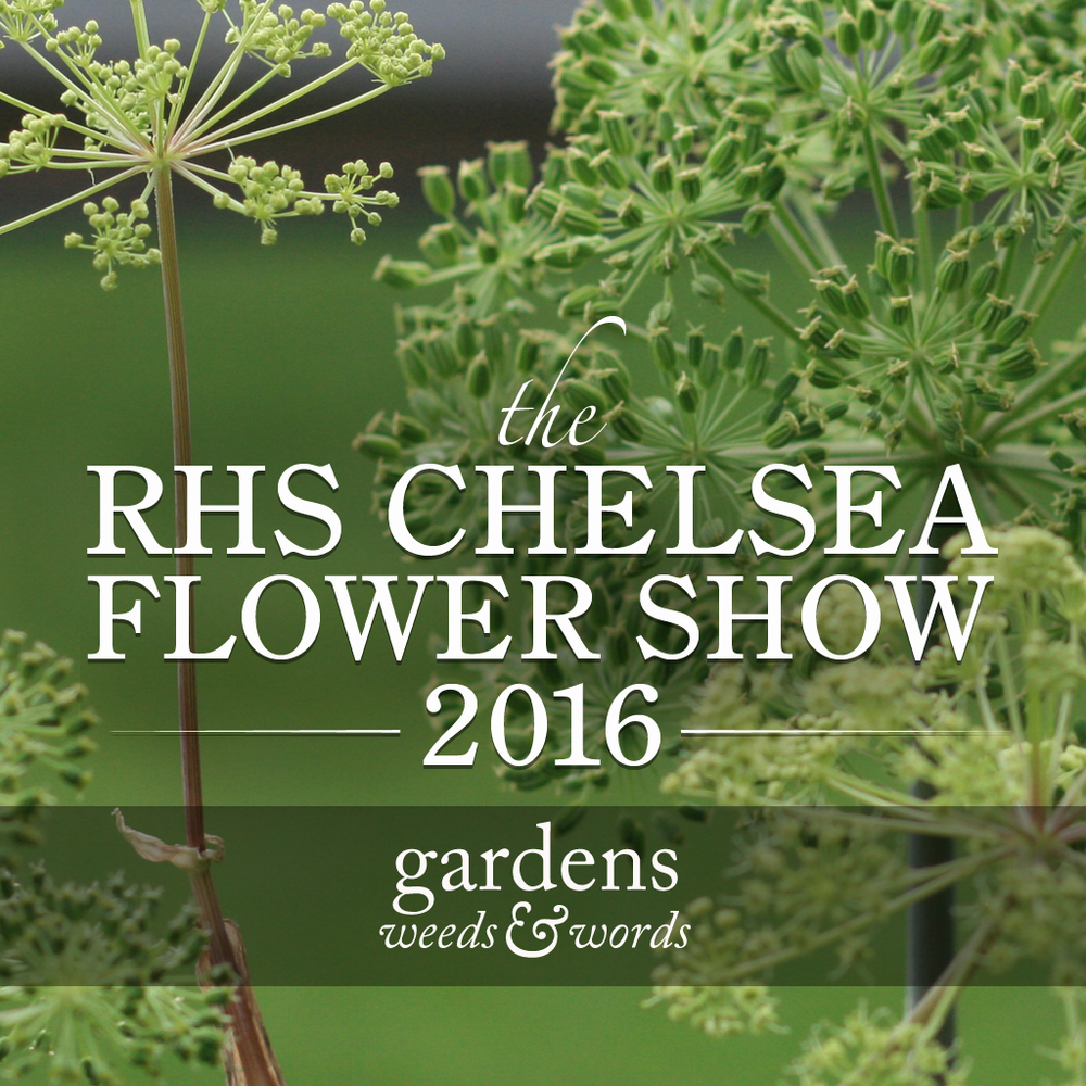 Rhs Chelsea Flower Show 2016 Gardens Weeds Words
