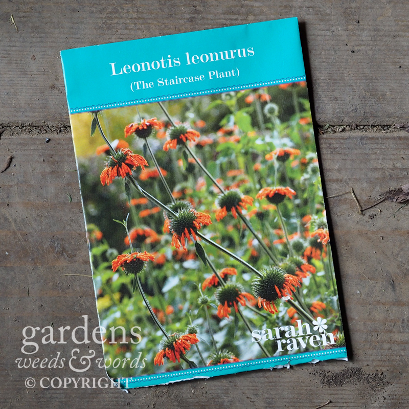 A packet of  Leonotis  seeds