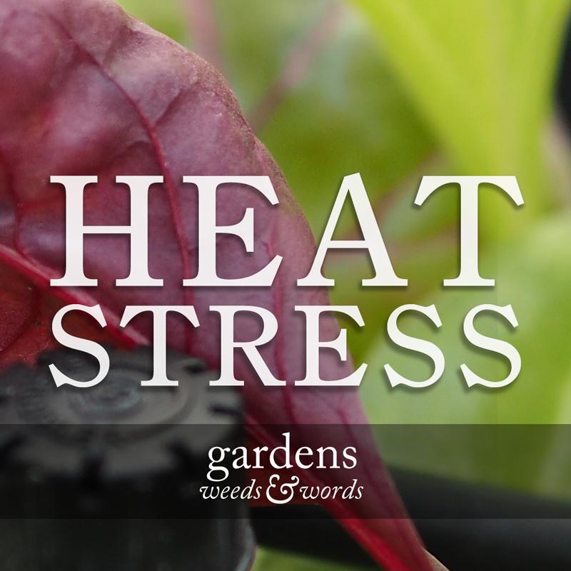 HEAT-STRESS.jpg